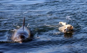 dolphin and dog on their daily swim