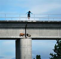 Goats stuck on ledge, photo by Humane Society