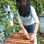 Bee researcher Marla Spivak, courtesy of MacArthur Foundation