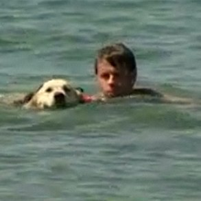 doggie lifeguards in action, from NBC video