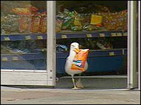 seagull is a shoplifter