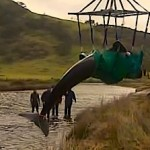 whale rescue video from BBC