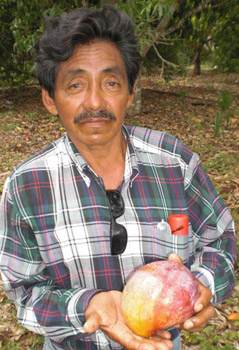 mango-farm-associate-jesus-hernandez-News21