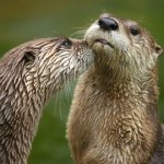 otters photo by Dmitry Azovtsev CC license