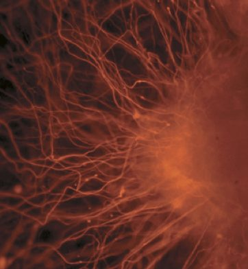 ebryonic stem cells -PublicLibraryofScience-CClic