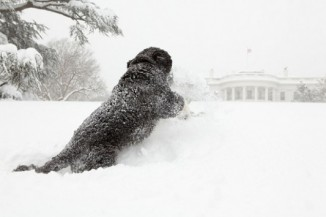 Bo, the Obama's family pet, plays in the snow during a blizzard on the south grounds of the White House, Feb. 10, 2010.  (Pete Souza)