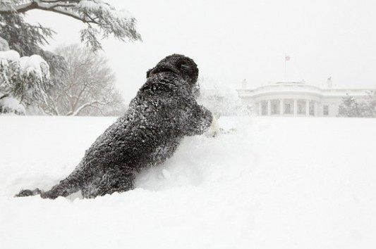 Sweetest Moments From the Obama Years In Photos (2009-2017) 2bo-obama-plays-blizzard2010-WH_533_354_90