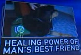 Hero the therapy dog on Fox News-graphic