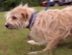 dog crawls home after tornado