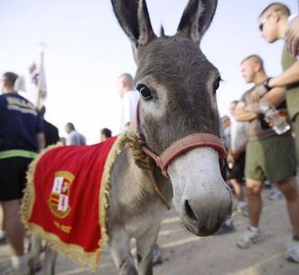 photo of the adopted donkey, Smoke, via DOD