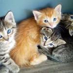 4-kittens-chelle-morguefile
