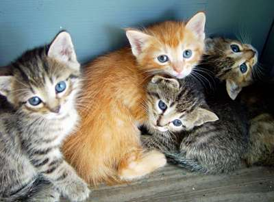photo of 4 kittens by chelle via morguefile