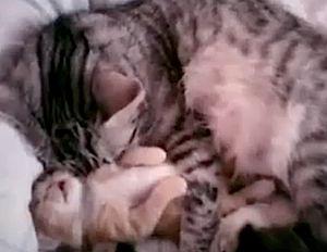 cat-w-kitten-bad-dreams