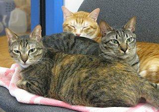 Tabby's Place trio