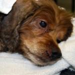 injured dog file photo UM News