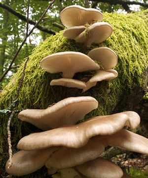 mushrooms -by Jorg-Hempel, CC license