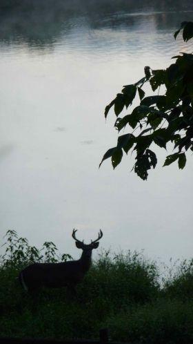 buck-verticle-sillouette