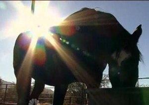 horse in silouette, NBC video clip