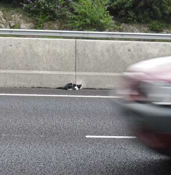 kitten on freeway
