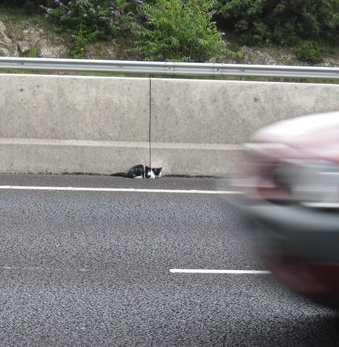 kitten on freeway