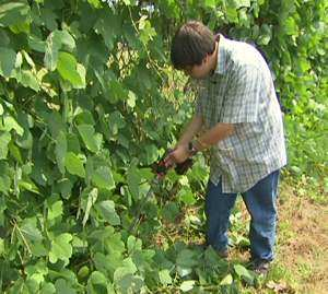 Jacob Schindler battles Kudzu - CNN video shot