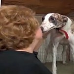 greyhound rescuer with adopted dog - CNN video clilp