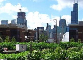 Urban agriculture Chicago City Farm CC Linda Flickr