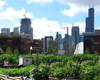 Urban agriculture Chicago City Farm CC Linda Flickr