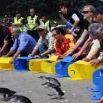 Penguins released in New Zealand