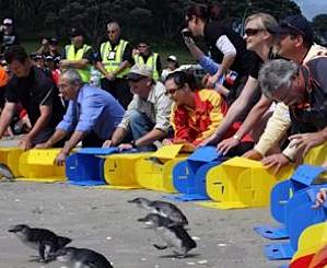 Penguins released in New Zealand
