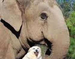 elephant and dog in TN sanctuary