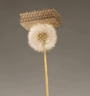 lightest material ever invented sits on dandelion