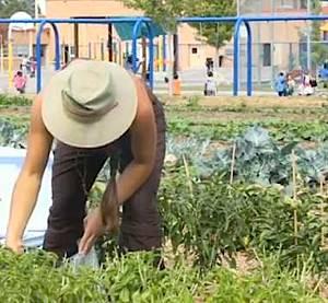 Garden at Denver Green School - Sprout City Farms video