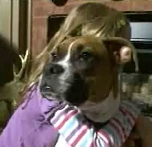 boxer saves family from gas leak NBCvid