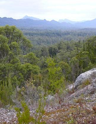 Mountains forest landscape in Tasmania - Photo by DSEWPaC copyright