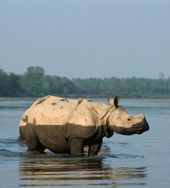 Rhino in Nepal - WWF photo
