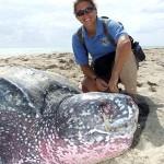 leatherback giant turtle - USFWS, Gisella Burgos