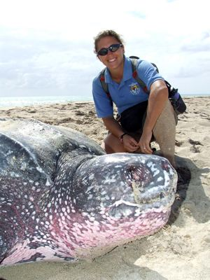 leatherback giant turtle - USFWS photo by Gisella Burgos