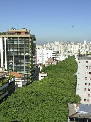 Brazil treelined Rua Gonalo de Carvalho-clicrbsdotcombr