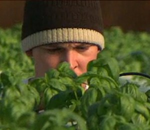 Farm helps veterans - NBC video clip