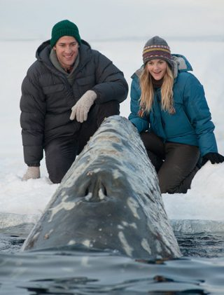 Film Big Miracle Barrymore Krasinsky