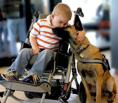 Service dog guards wheelchair Hembree-family-photo