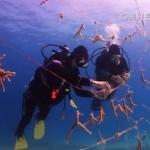 Coral Reef nursery - CNN Video