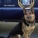 Crime-fighting dog, Wheeler -NYCity Police Dept