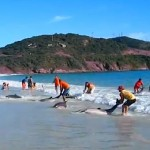 Dolphin rescue Brazil-YouTube