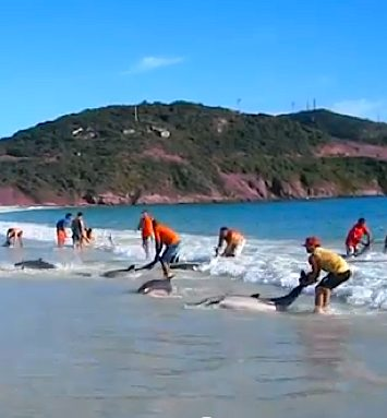 Dolphin rescue Brazil - YouTube clip