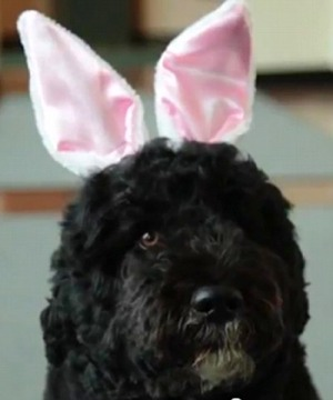 Bo Obama Easter Ears