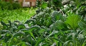 Farming urban Chicago-photo The Plant