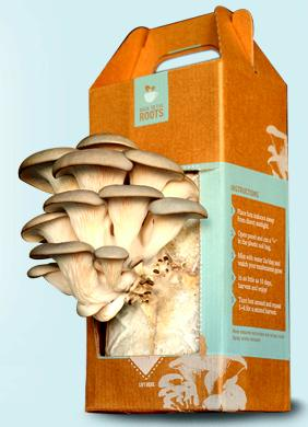 Mushroom kits from Back to the Roots