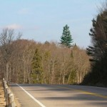 Road tree-dusguised towers from Bell Canada